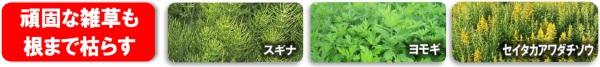 難防除雑草